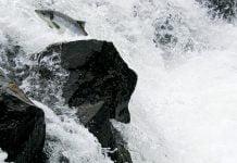Sjávarfoss, Elliðaárnar