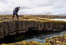 Þingvallavatn, Fish Partner