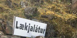 Þjórsá, smálax